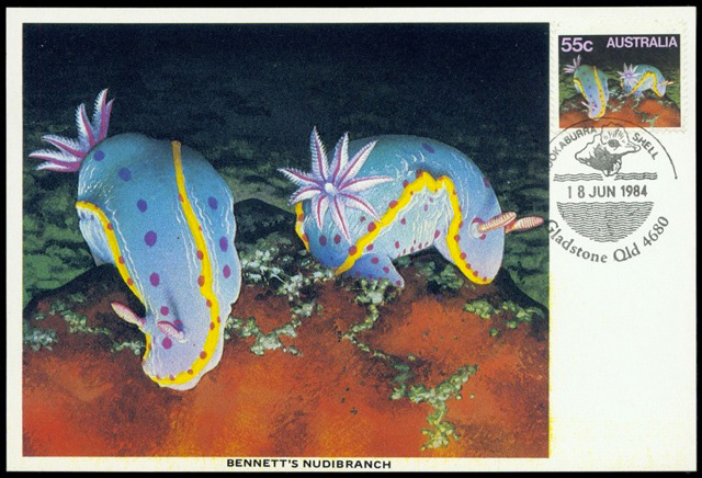 Bennett's Nudibranch
