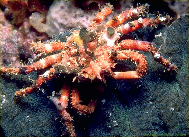 decorator crab and sponge relationship help