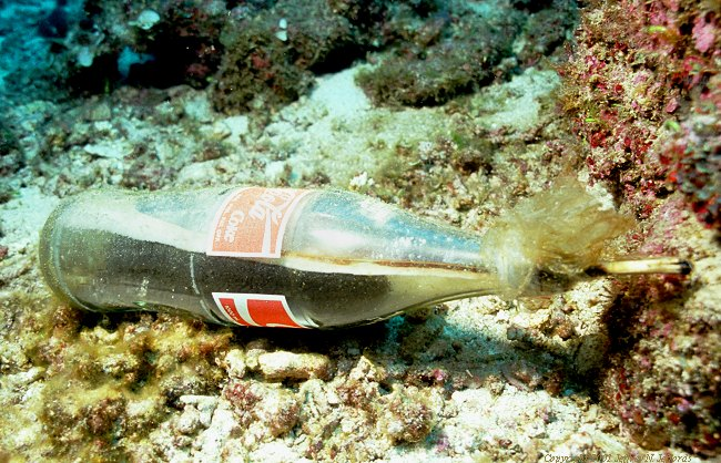 dynamite or blast fishing bottle at Capone Islands, Philippines [105K]