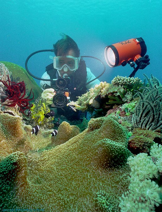 reef scene -- my friend Bob photographs anemonefish [