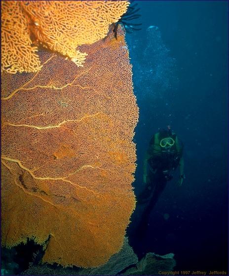 Erick and giant sea fan (#73, 16 Apr '98, 100k)